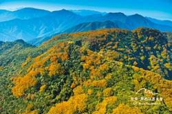 唯美微噴版畫 一同見山的美好
