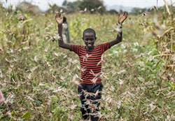 東非爆發嚴重蝗災 將導致糧食危機