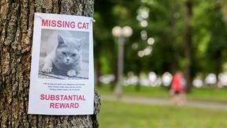 男幫找回萬元懸賞貓 反遭主人嗆聲