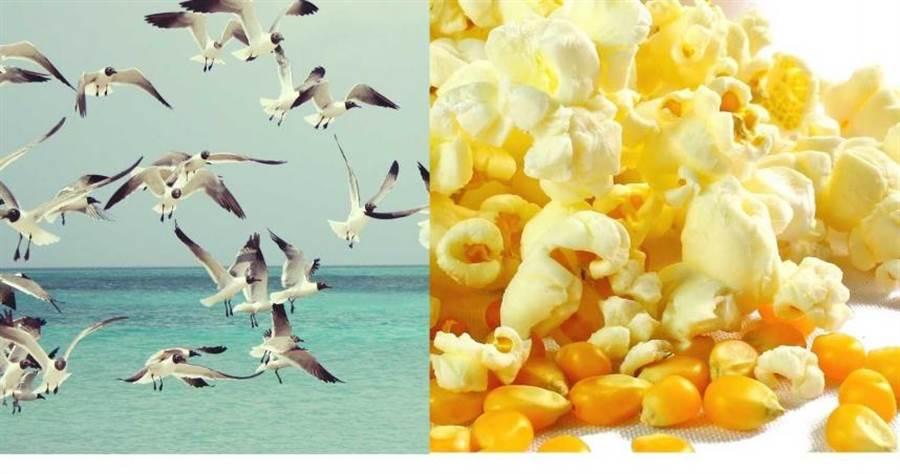 爆米花成了殘害海鷗的最佳誘餌?(圖/Pixabay)