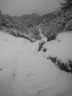 玉山、合歡山都下雪了!上山衝雪民眾樂透