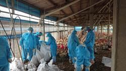 天冷易傳禽流感 專家提醒防疫這招不可少