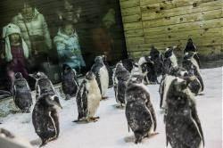 武漢封城水產品短缺 動物園企鵝挨餓