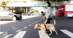【用愛領航4】驕傲成為導盲犬 養父母只能含淚相送
