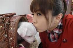 劉樂妍傳回台避難 怒吼「我家不在那」揭返台真正目的