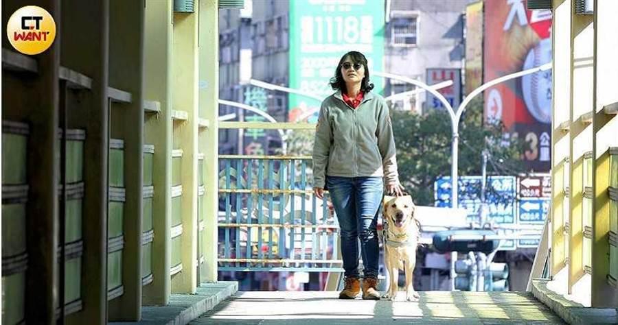 導盲犬是視障者第2雙眼,在水林叢林中走出安全道路,但每隻導盲犬的背後都藏有寄養家庭的關心和牽掛。(圖/趙世勳攝)