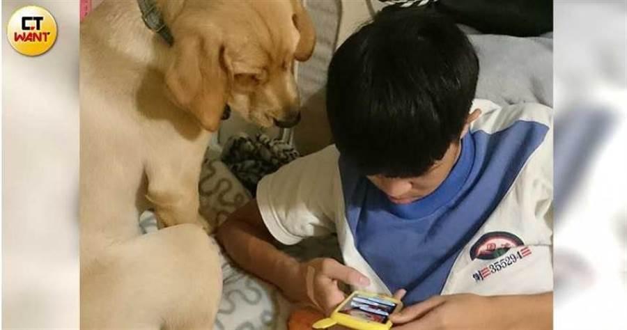 雖然相處時間有限,陳碧文一家仍把小導盲犬當成寶貝,捧在手心上疼愛照顧。(圖/讀者提供)