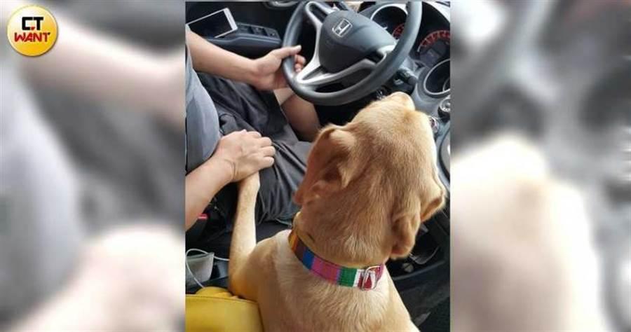 碧文先生起初對培育導盲犬不置可否,狗兒到來後也抵擋不住可愛笑容,「父女」開車出遊時還會緊握著手。(圖/讀者提供)