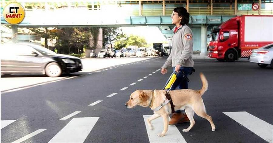 小導盲犬1歲後要回到學校接受訓練,狗兒抬頭挺胸服務盲人的背後,卻藏有「養父母」無限羈絆與牽掛。(圖/趙世勳攝)