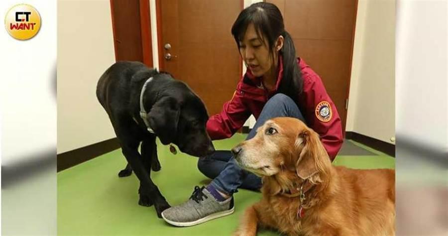寄養家庭數量不足是導盲犬稀少的重要原因,惠光導盲犬學校主任彭筱涵呼籲愛狗人士踴躍報名,幫忙培育視障者的開路天使。(圖/趙世勳攝)