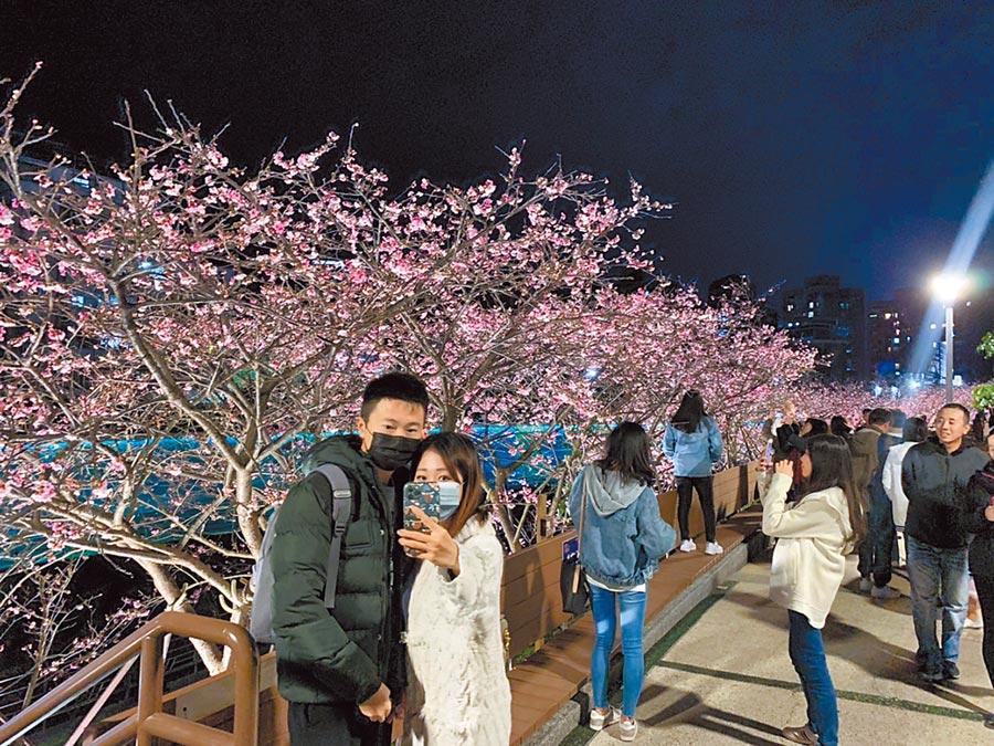 2020樂活夜櫻季於2月2日開跑,展期為期一整個月,吸引民眾打卡拍照。(張薷攝)