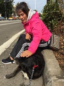 老翁與狗長年共患難 雙雙受到良好安置
