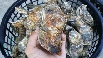 可消毒不揮發   專家推薦牡蠣殼助防疫