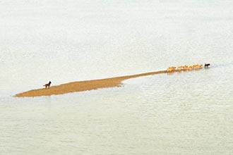 楊順發海中行走 跟著土狗看台灣