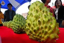 大陸疫情害慘台灣農業 釋迦外銷衰退17%
