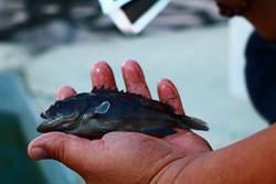 枋寮養殖戶危機感爆發 從「殘留魚體」開創事業第二春