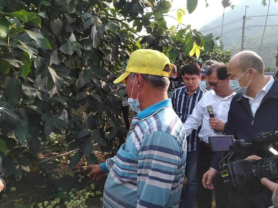 寒流過境,高市蓮霧漸有災情顯現,市長韓國瑜特地到六龜產地關心災損情形並籲請公所持續查報,以確保農民權益。(林雅惠攝)