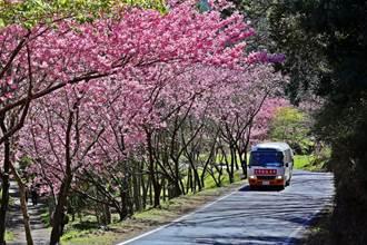 武陵櫻花季周六開跑 客運每天至少消毒2次