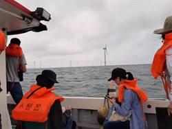 防離岸風電開發噪音!立台灣鯨豚觀察員制度護生態