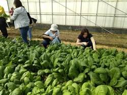疫情影響有機菜農生計 南科鼓勵廠商採購