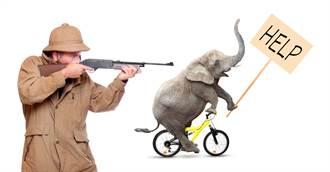 波札那開放獵象 一頭花130萬台幣