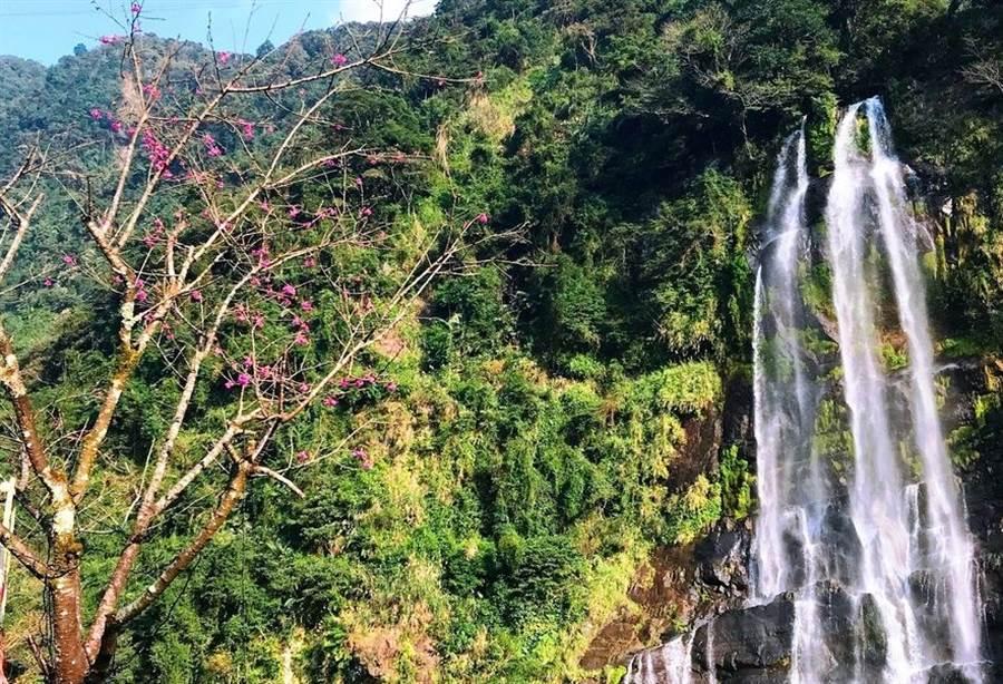 勇士廣場有山水環繞的瀑布及婀娜多姿的櫻花的美景。(圖取自新北市景觀處官網)