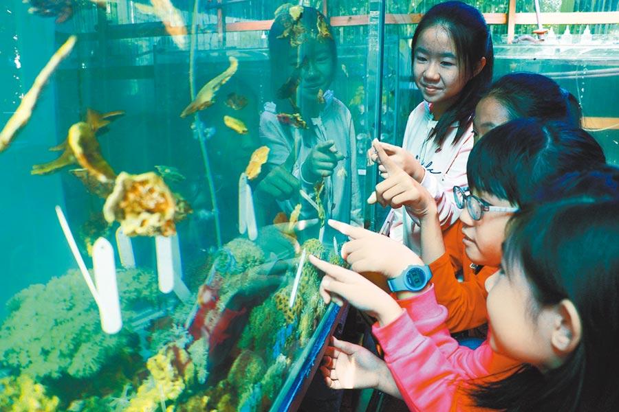 佳冬養殖國振帶小朋友親手種珊瑚,透過近距離接觸發現,神祕的海底世界其實很貼近生活。(謝佳潾攝)