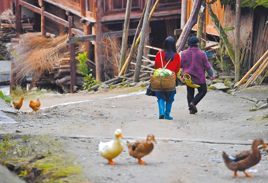 1月19日,大陸的大四學生韋燕(左)返回廣西融水大苗山過年,歷經30個小時才到家。圖為韋燕和媽媽上山摘菜回來準備晚飯。(新華社)