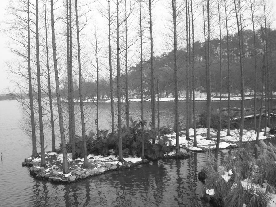 在楊公堤看西湖殘雪。(作者提供)