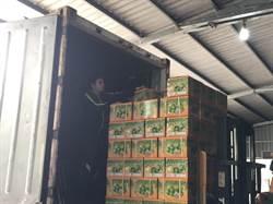 克服疫情阻礙 高雄蜜棗3水果再裝櫃6公噸銷陸