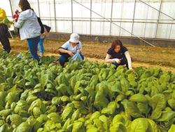 有機菜農遭波及 媒合南科廠商購買