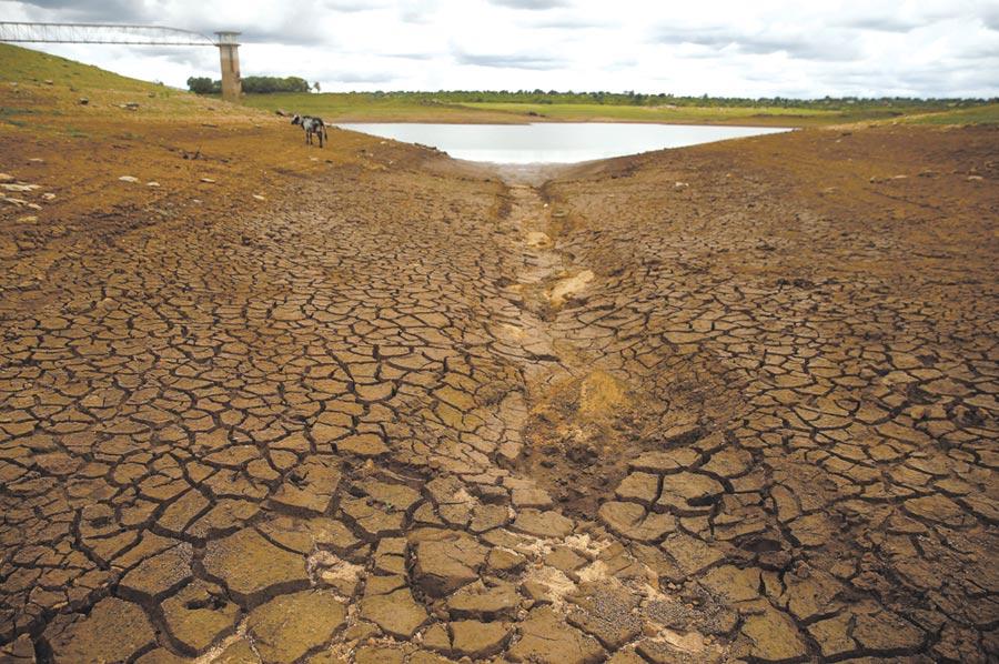 辛巴威旱災嚴重圖╱路透