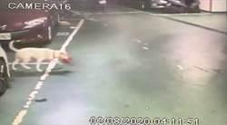 毒品藏地下停車場 鄰居愛犬叼出助警破案