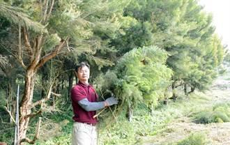 十年磨一劍 屏東自產茶樹精油熱銷