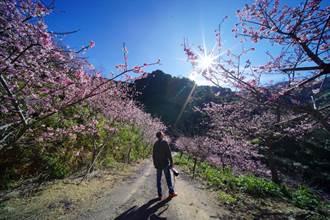 春季遊三峽 玩遍各大景點看這裡