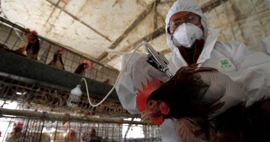 禍不單行!湖南省和四川省爆發「禽傳人」禽流感疫情。(圖/中新社)
