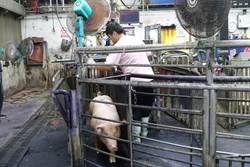 豬價春節後跌破60元大關創10年來同期新低