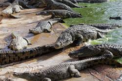 垂掛手機拍鱷魚池 往上拉一看崩潰