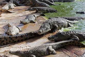 恐怖醫師狂殺「50計程車司機」 屍體全丟鱷魚池
