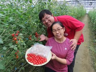 台南在地農特產「混搭」小番茄虱目魚丸好滋味