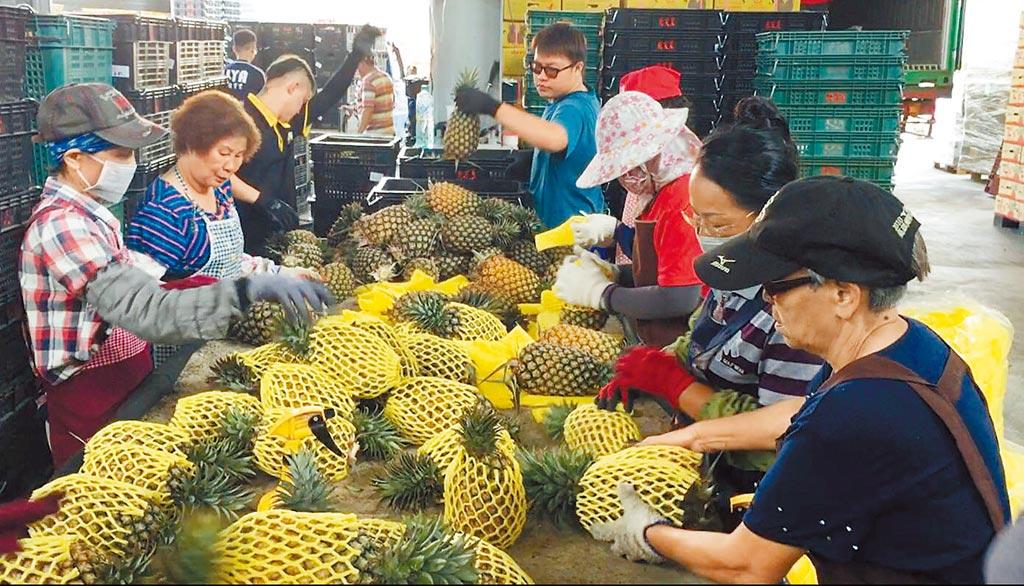 雖然新冠肺炎疫情影響農產外銷,但高雄水果外銷星馬穩定,14日再出貨逾30公噸。(高市農業局提供/林宏聰高雄傳真)