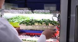 跨上國際貿易舞台前 農委會:辦理種子病原檢測服務