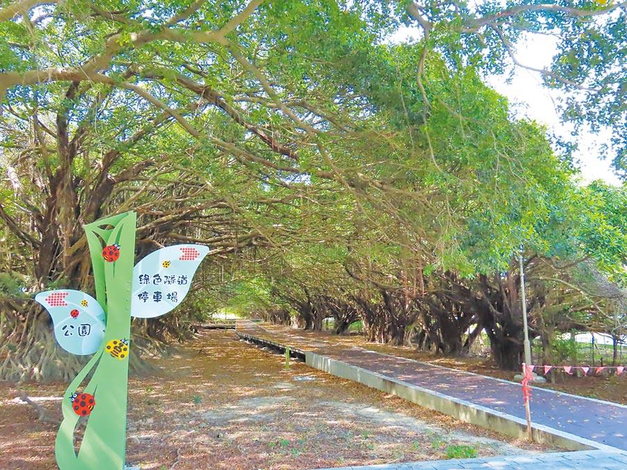 新營長勝營區重劃區保留原有景觀環境,曾是電影場景的綠色隧道還設置高架棧道。(莊曜聰攝)
