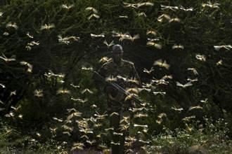 影〉東非蝗災數十年僅見 宛如聖經景象