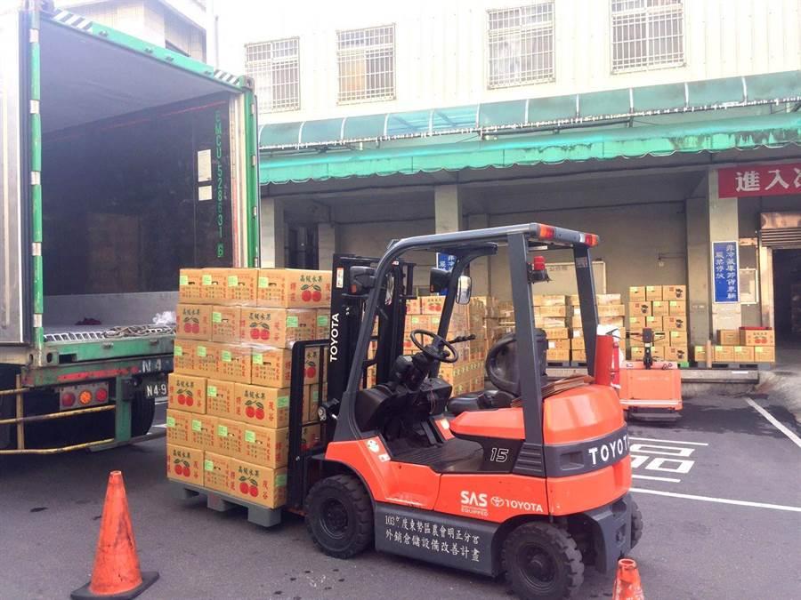 台中茂谷柑今年首批出口新加坡18公噸,堆高機加緊裝櫃作業。(台中市農業局提供/王文吉台中傳真)
