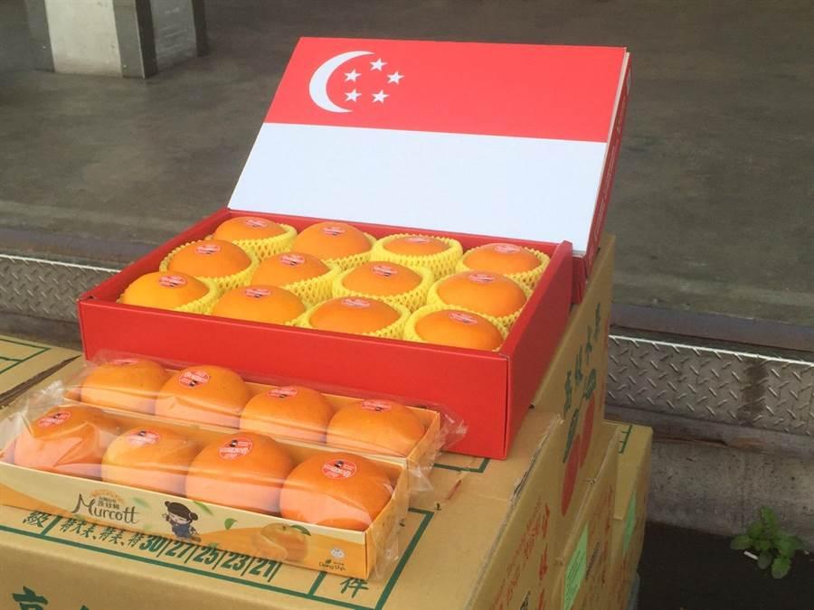 外銷新加坡的台中茂谷柑為「27A」精品等級。(王文吉攝)