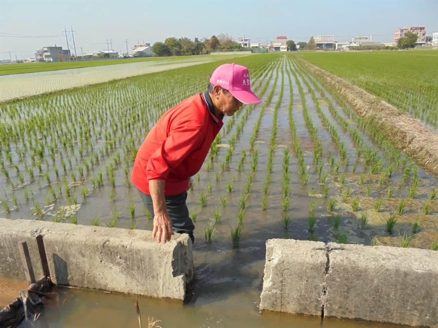 一期稻作春耕高峰,灌溉用水吃緊。(許素惠攝)