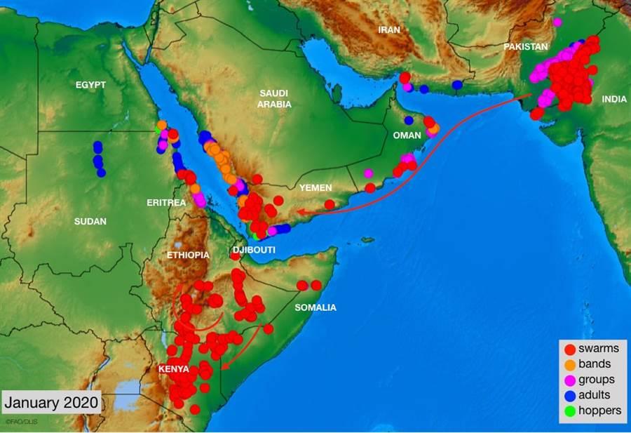 東非正遭嚴重蝗災,「華盛頓郵報」報導,這批蝗蟲遠看像是滾滾濃煙,接近後這數十億蝗蟲大軍又像難以數計的雨點。圖為今年1月情形。(圖/聯合國糧農組織)