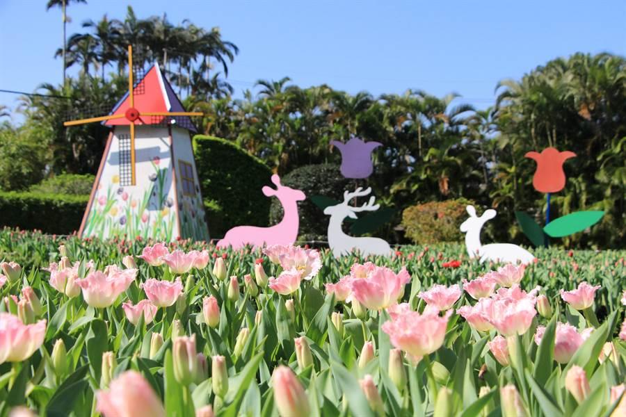 粉紅羽狀的鬱金香與荷蘭風車相得異彰。(圖取自台北市公園處官網)
