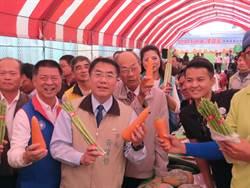 台南將軍紅蘿蔔外銷訂單嚇嚇叫 這個地方最愛它